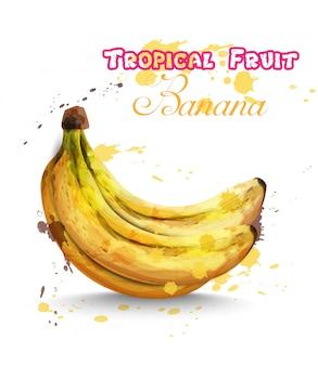Bananenfrüchte aquarell