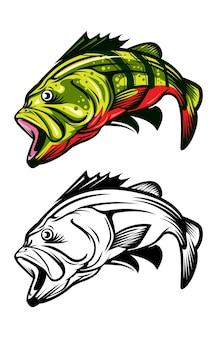 Bass fisch zwei färbung