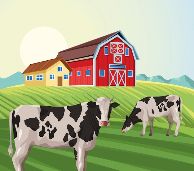 Bauernhausscheune, die kuh auf dem gebiet isst