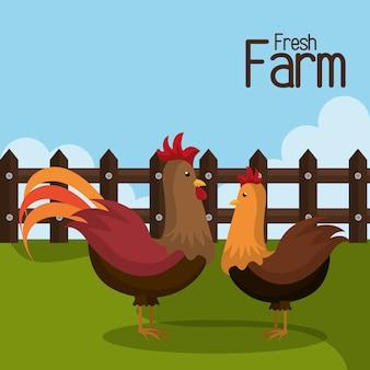 Bauernhof frisch