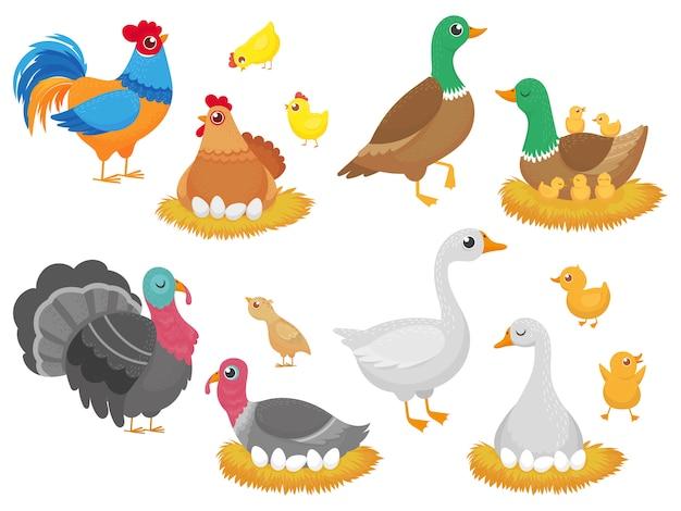 Bauernhofvögel. geflügelhuhn, gänseentenvogel und truthahnfamiliennest lokalisierten karikatursatz