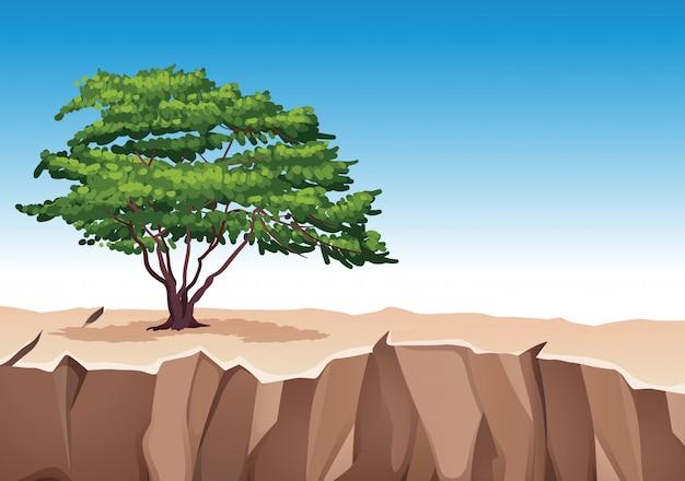 Baum auf steinberg