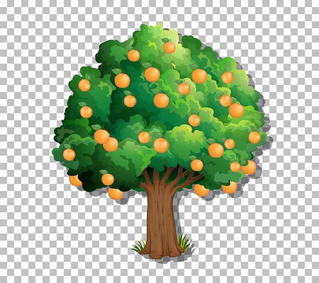 Baum auf transparentem hintergrund