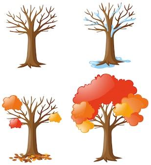 Baum in verschiedenen jahreszeiten
