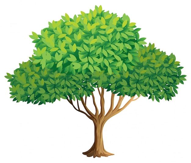 Baum Kostenlosen Vektoren