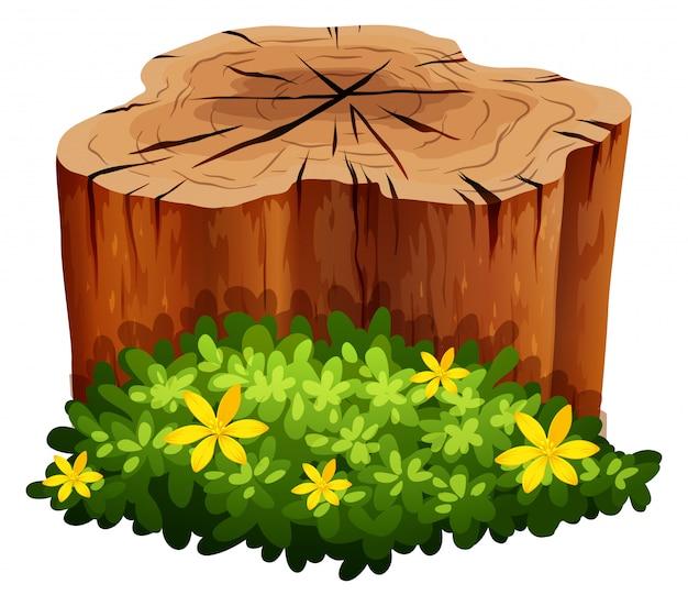 Baumstamm und grüner busch