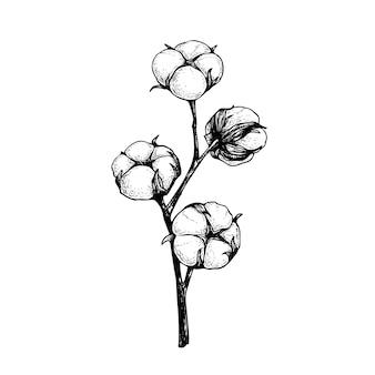 Baumwollblumenzweig mit flauschigen knospen. hand gezeichnete skizzenartillustration der natürlichen öko-baumwolle. vintage graviert. botanische kunst auf weißem hintergrund.