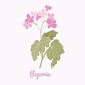 Begonienblume auf einer rosa blühenden begonievektordatei des weißen hintergrundes