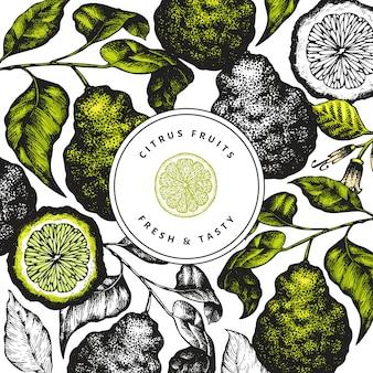 Bergamotte zweig entwurfsvorlage. kaffir kalk rahmen. hand gezeichnete vektorfruchtillustration. vintage citrus hintergrund.