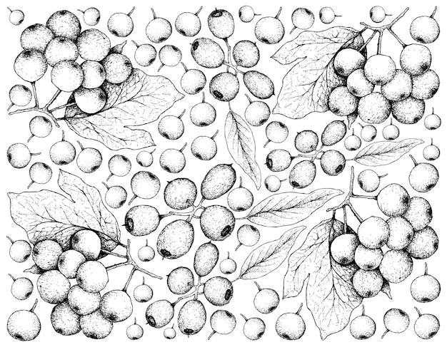 Berry fruit illustration wallpaper von hand gezeichnete skizze