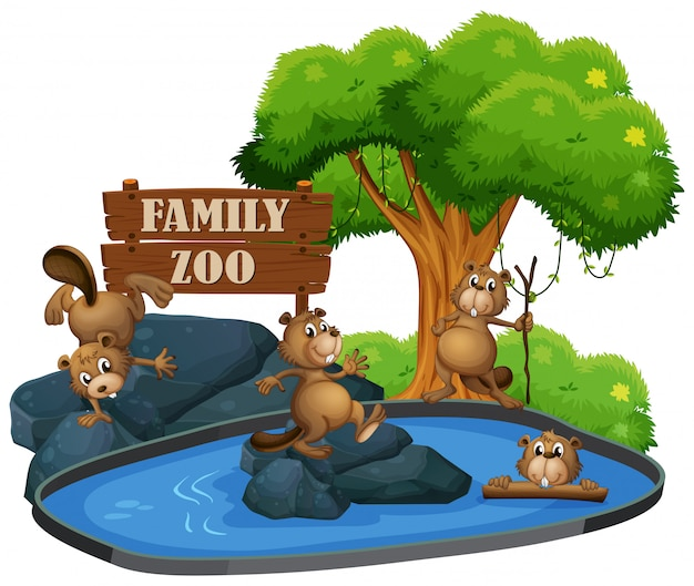 Biber im zoo