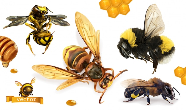 Biene, hummel, wespe, hornisse. realistischer ikonensatz 3d