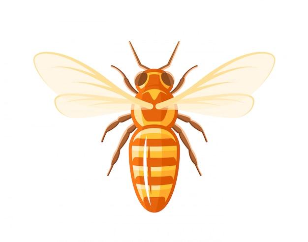 Biene in der draufsicht isolierte illustration in der hand gezeichnet