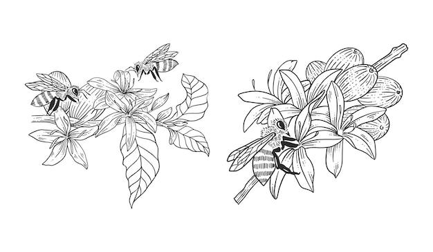 Biene mit kaffeebaum handgezeichneten illustrationen vorlagensatz
