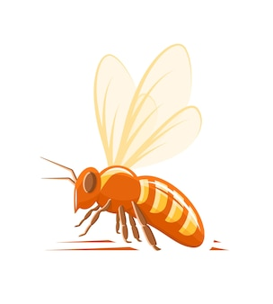Biene seitenansicht isoliert auf weißem hintergrund