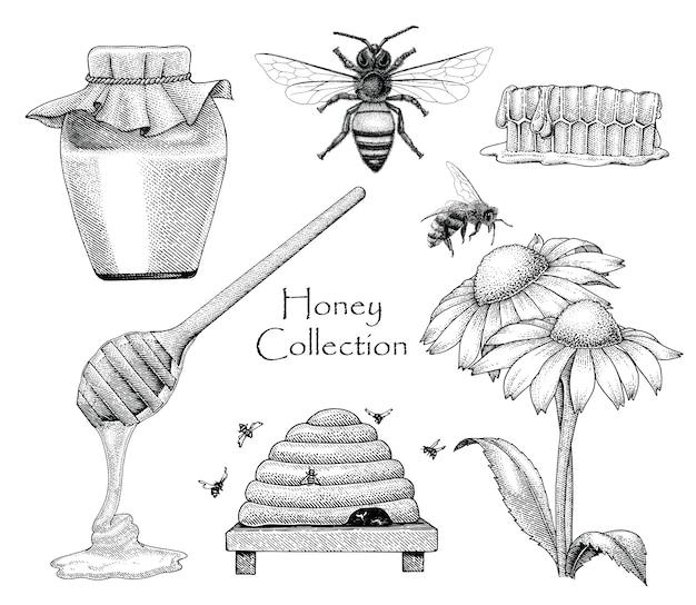 Bienensammlungssatzhandzeichnungsgravurstil auf weißem hintergrund