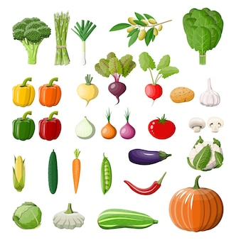 Big vegetable icon set.
