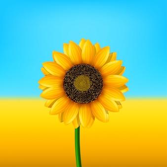 Bild der sonnenblume