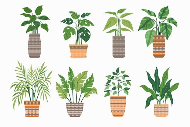 Bio flache zimmerpflanzensammlung