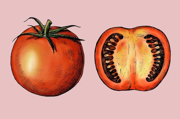 Bio frisch geschnittener tomatenvektor