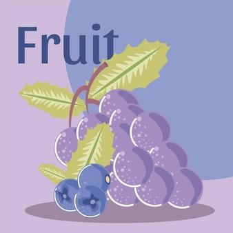 Bio-gesunde lebensmittelillustration der frischen früchte der trauben und der blaubeere