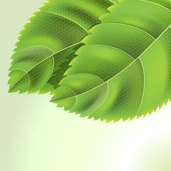 Bio green hinterlässt hintergrund mit tropfen auf weiß