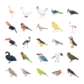 Birds flat vector icons pack