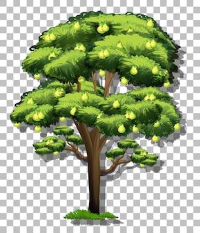 Birnbaum auf transparent