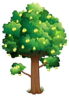 Birnenobstbaum isoliert auf weißem hintergrund