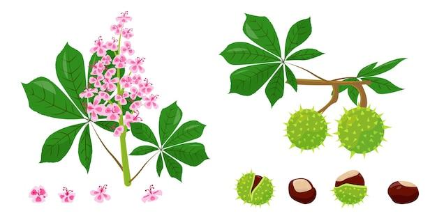 Blätter, blüten, schalen und samen von kastanien.