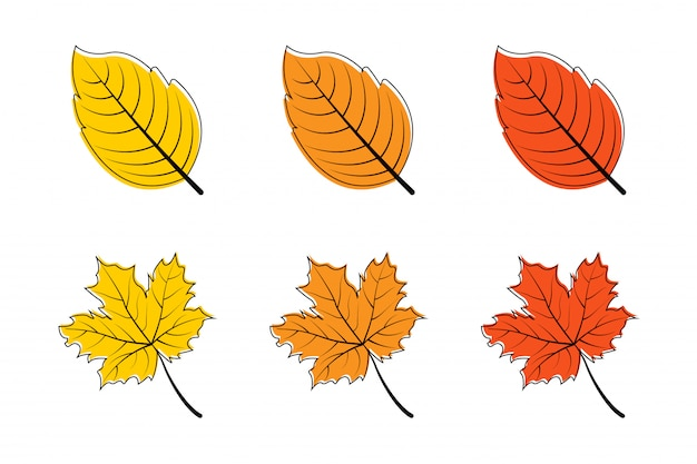 Blätter. herbstblatt. blätter ahorn. blatt andere farbe. herbstlaub ahorn.