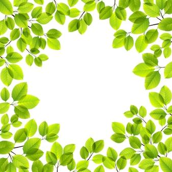 Blätter isoliert