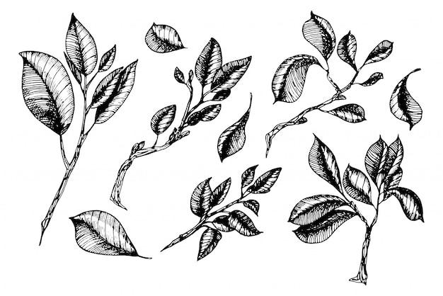 Blätter sammlung in gravurstilen