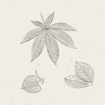 Blätter zwei