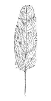 Blatt-bananenpalme vintage-vektor-gravur schwarz monochrome darstellung isoliert auf weiß