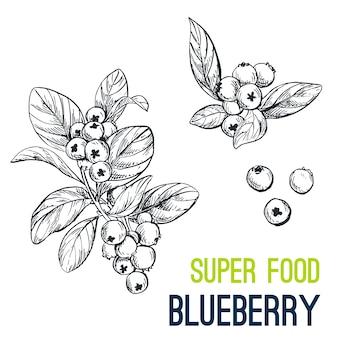 Blaubeere. super essen von hand gezeichnet