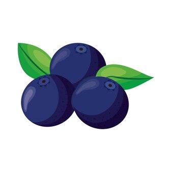 Blaubeeren fruchtvektor