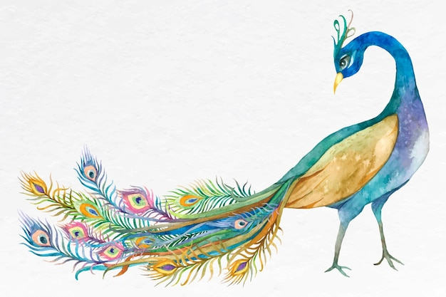 Blauer pfauvektor des schönen aquarells