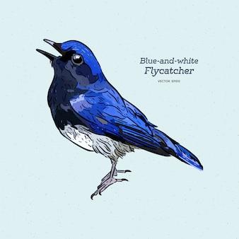 Blauer und weißer fliegenschnäpper (