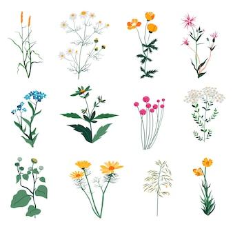 Blühende blumen und gras, wildblumen und vegetation von wiesen und kräutern. calendula und kamille, klee und blauaugenflora. aster in der landschaft, frühlingssaison blüht. vektor im flachen stil