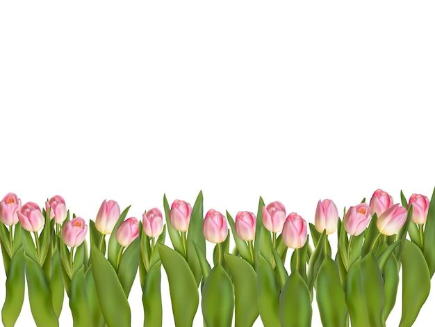 Blühende dekorative grenze der tulpen über weißem hintergrund mit kopienraum.