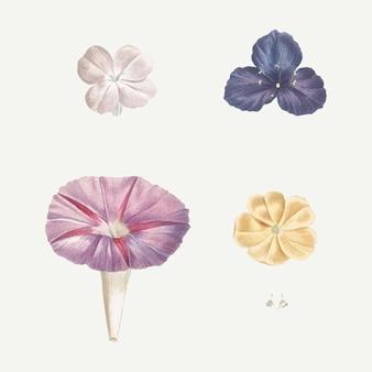 Blühende gemischte blumen