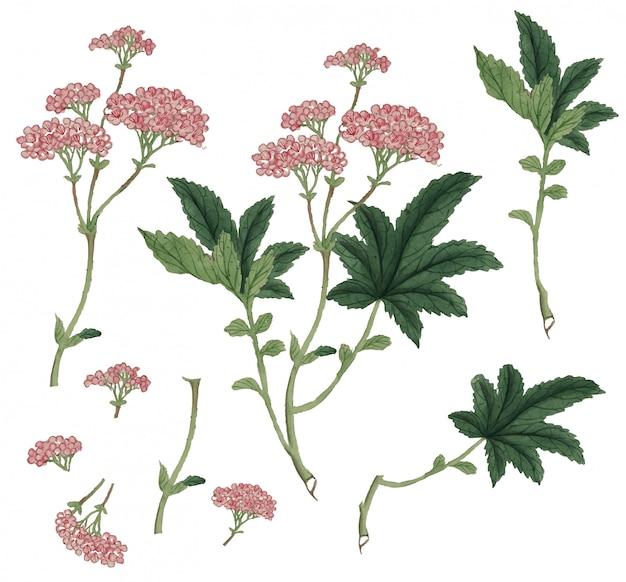 Blühende hellrosa kirschblüte-blumen