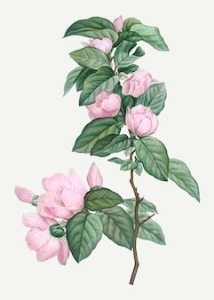 Blühende rosa blüten