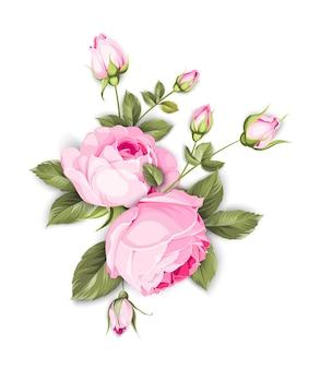 Blühende rose auf dem weißen hintergrund