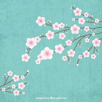 Blühenden kirschbaum zweig