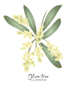 Blühender olivenbaum-zweig handgezeichnete isolierte illustration auf weißem hintergrund