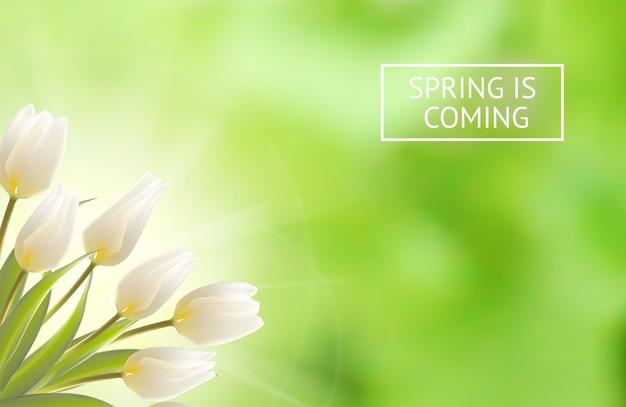 Blühender tulpenhintergrund