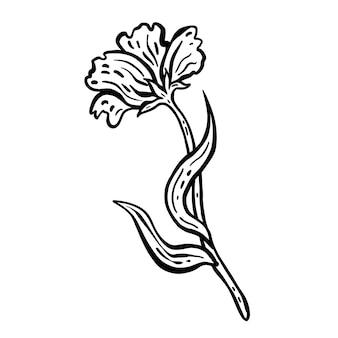 Blüte mit stiel und blättern. handgezeichnete vektor-illustration. monochrome schwarz-weiß-tintenskizze. strichzeichnungen. isoliert auf weißem hintergrund. malvorlagen.
