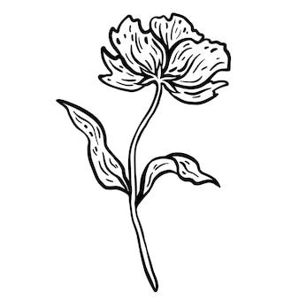 Blüte mit stiel und blättern. handgezeichnete vektor-illustration. monochrome schwarz-weiß-tintenskizze.